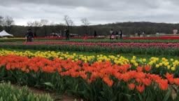 Spring Blooms Farm Tour #kellylehman @cranbury
