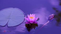 Inner Landscape  Guided Meditation